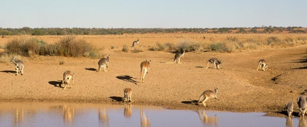 red-kangaroo-picture-id511653090John Carmello